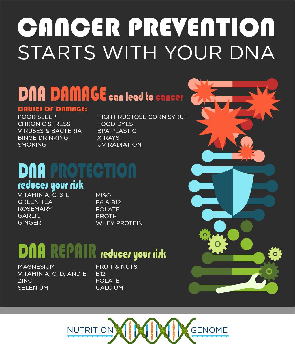 DNA Replication, Damage and Repair
