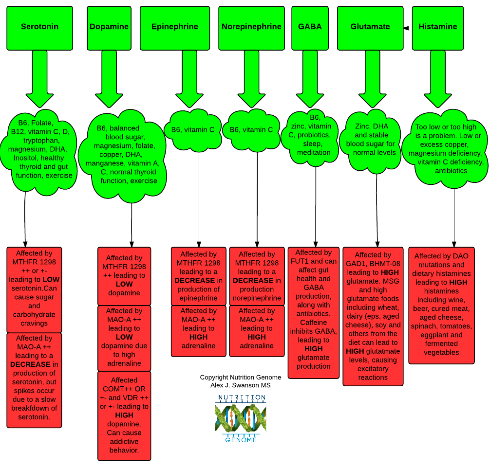 Neurotransmitter Mutation Chart