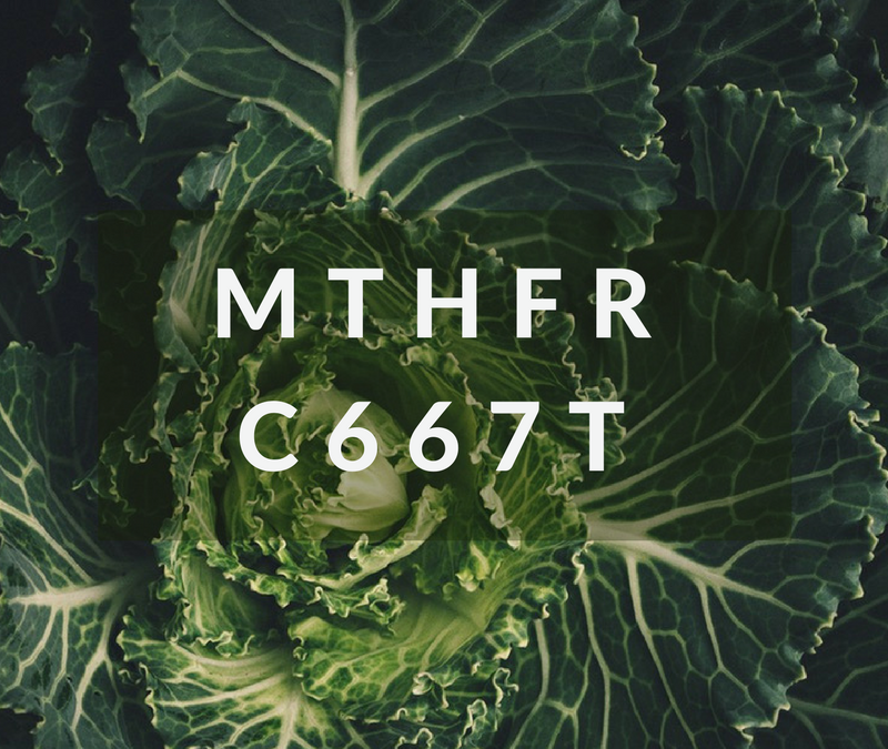 What is MTHFR C677T?