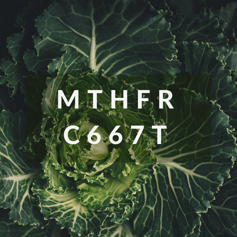 What is MTHFR C677T? DNA-Based Nutrition
