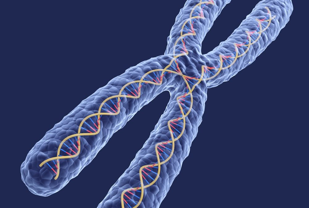 Topic 1: Understanding DNA Protection, Damage and Repair