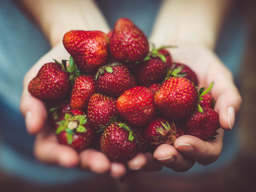 2 Woman holding handful of bright red strawberries e1526599706200