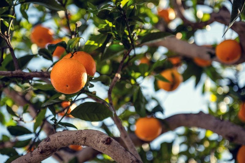 How the SLC23A1 Gene Affects Vitamin C Levels and Immunity