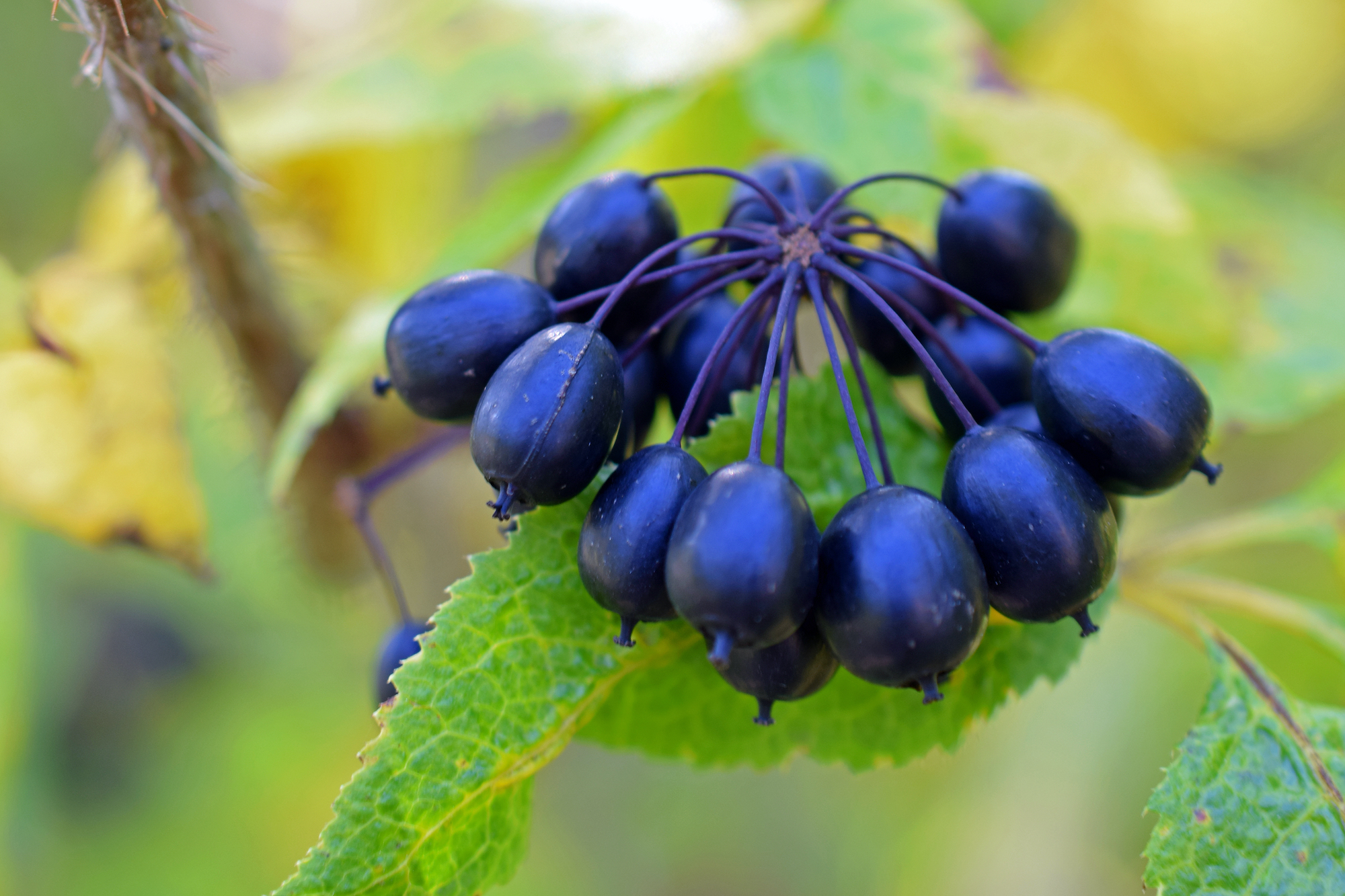 How to Use Adaptogens to Enhance Your Genetics